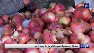 محافظة إربد صاحبة النصيب الأكبر بمساحة الأراضي المزروعة  بشجرة الرمان