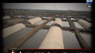 منى العراقي: الحكومة أجبرت مزارعي السمك على «المشي شمال» (فيديو)