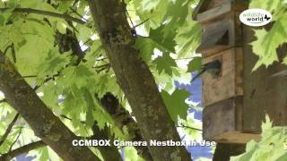 The Wildlife World Ccambox Camera Nest Box Product In Use Video