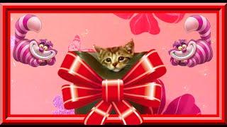 😻 Котята в сапоге//Сколько котят поместится в один сапог? Кто первый сосчитает?:)