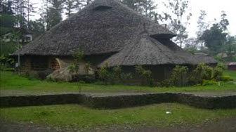 Negiso - Tropicals of  Goroka