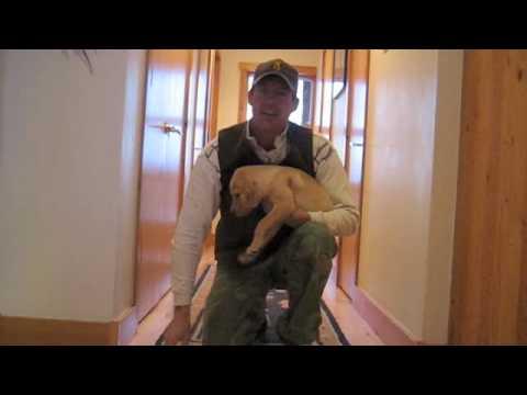 Puppy Training Future Gun Dog