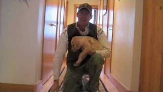 Puppy Training Future Gun Dog