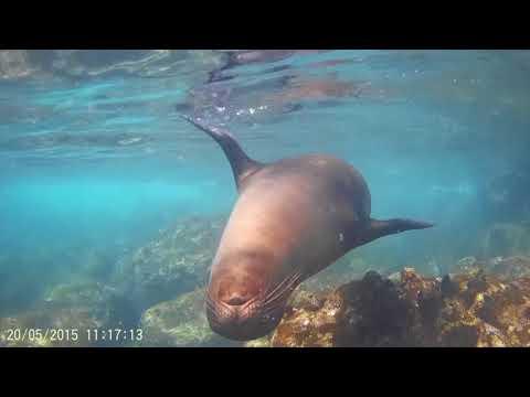 Travel The World Video   Ecuador and Galapagos