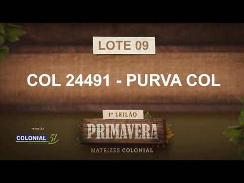 LOTE 09   COL 24491