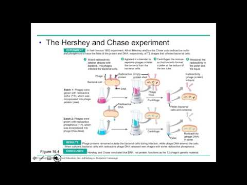 Ch 16 Molecular Basis of Life Lecture
