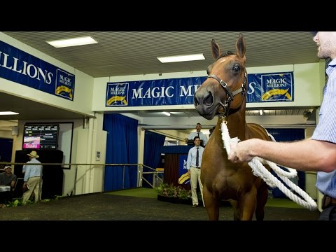 2015 Perth Yearling Sale Day 1