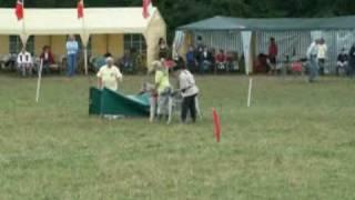 Irish Wolfhound Coursing