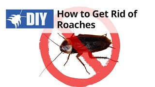 How to Get Rid of Roaches Yourself
