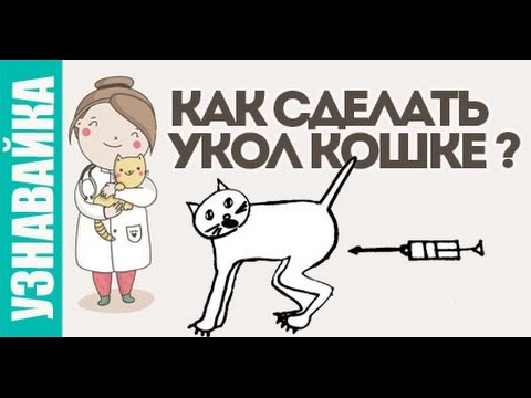 Вопрос: Как и куда делать самому укол кошке Мнения Советы?