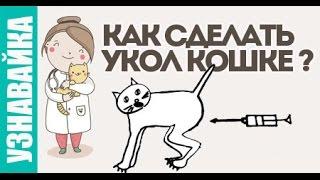 Как сделать кошке укол? Узнавайка