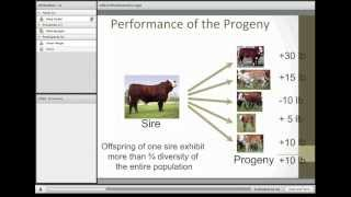 understanding and utilizing epds in the selection of sires