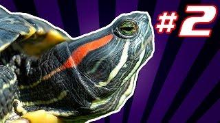 Содержание красноухой черепахи в домашних условиях.Справочник террариумиста #2