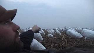 2009 Spring Snow Goose Hunting - Squaw Creek National Wildlife Refuge outside Mound City, Missouri