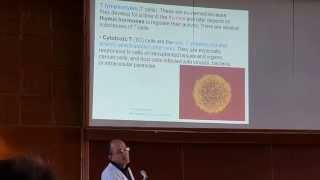 Иммунитет лекция ч 2