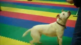 Richmond Scpa School For Dogs Tricks Training