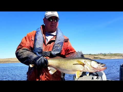 Walleye Spawning 2019 - NDGNF - 05-09-19