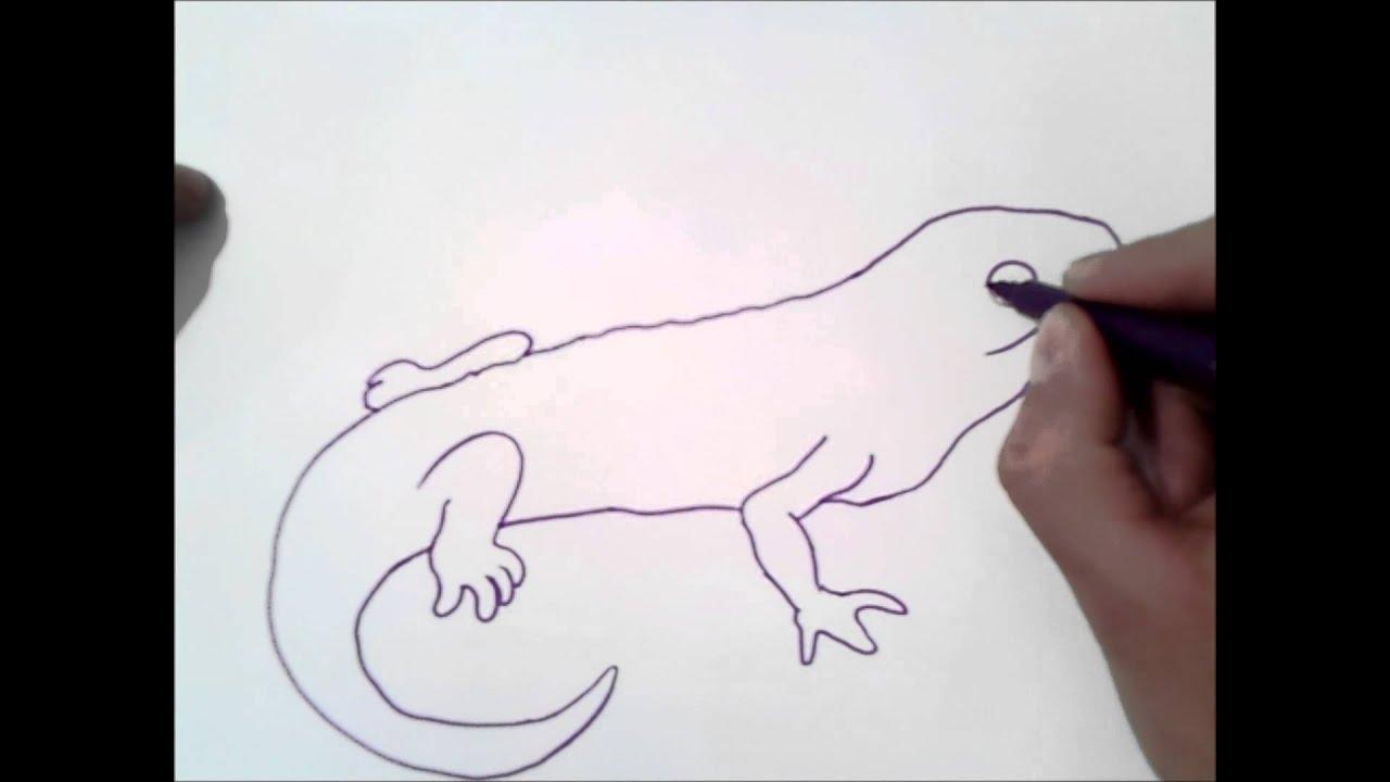 como dibujar una salamandra | como dibujar una salamandra paso a ...