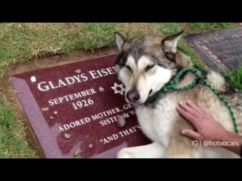 These Dogs are crying because their Bestfriend Died 😭💔 🎵hotvocals