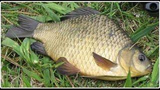 Рыбалка на карася. Конец августа 2015 года.