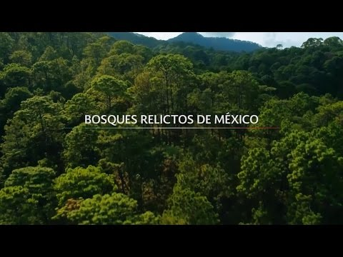 Bosques Relictos de México