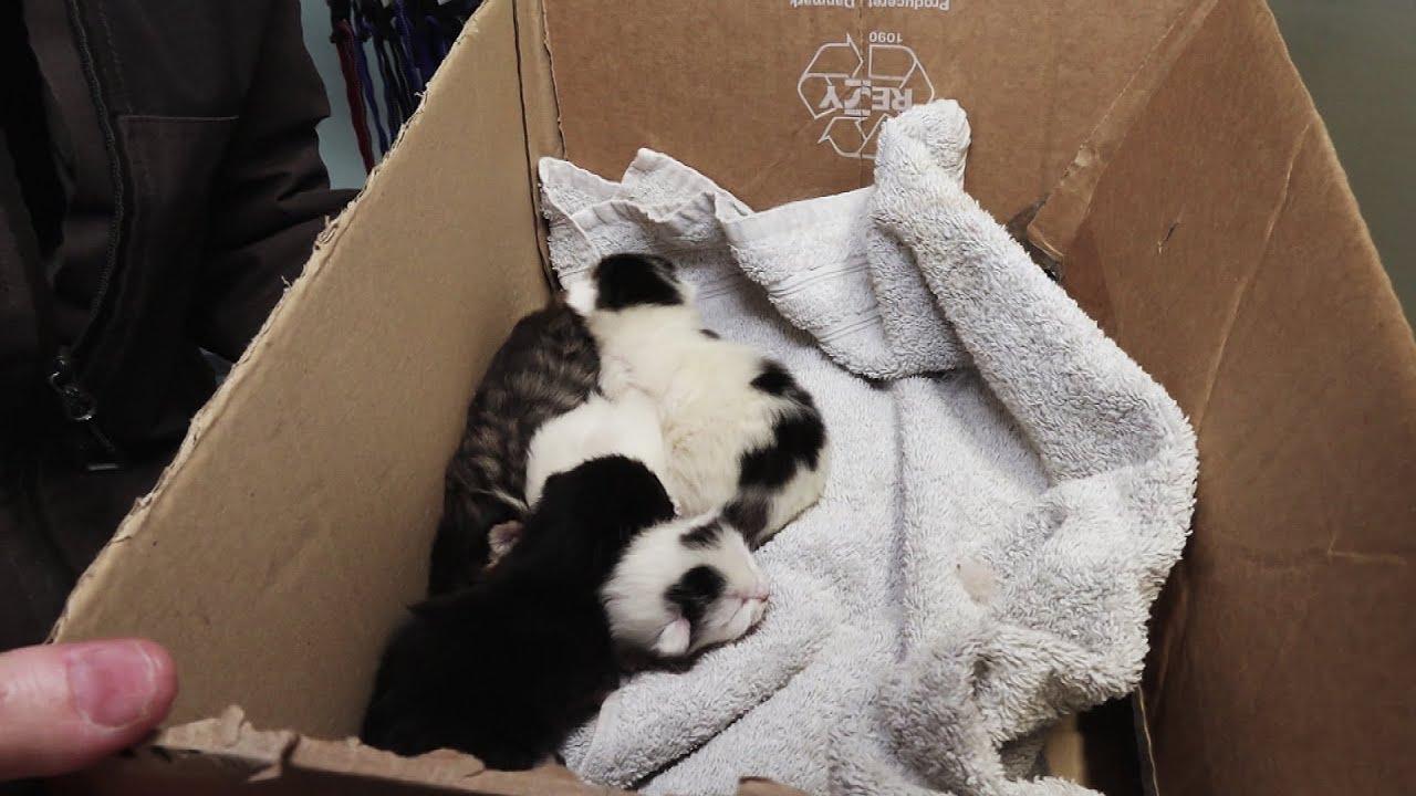 Fundet en kasse med killinger   Dyreinternatet S2E4