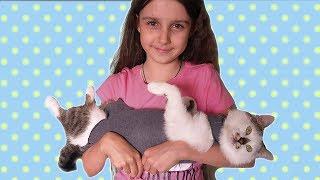 КАРАМЕЛЬКА после операции Как сделать ПОПОНУ для кошки LizaTube