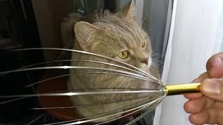 Кот говорит делай массаж