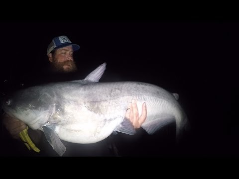 Catfishing At Night With LIVE And CUT Bait (Ft. Realistic Fishing)