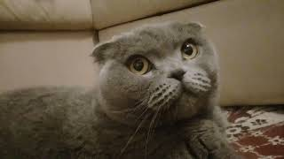 Домашнее животное-кот