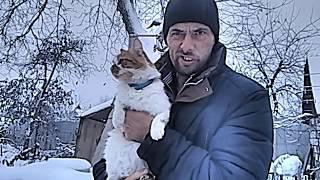 Берлога для кота
