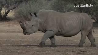 Afrika Wilde Tiere und Landschaften -JustEarth.TV Wartezimmer TV