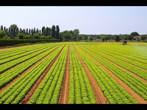 L'Agriculture Au Senegal
