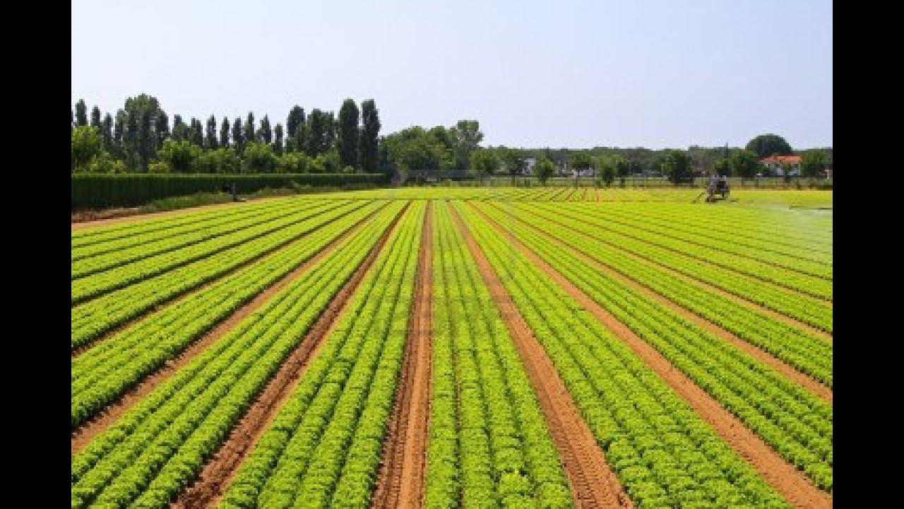 L 39 agriculture au senegal youtube for L agriculture