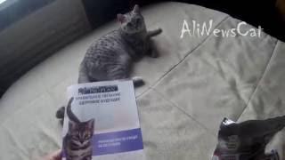 Бесплатный корм для кошек Proplan. Посылка из Москвы