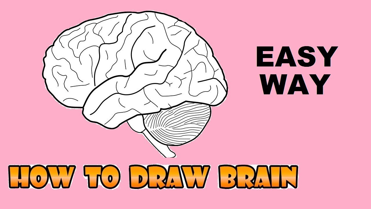 EASY WAY TO DRAW HUMAN BRAIN (L.S.) - YouTube