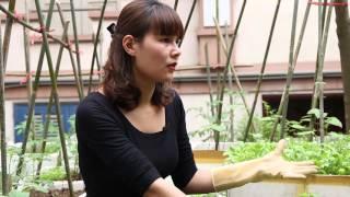 Vườn rau sạch tươi tốt của người phụ nữ mê trồng cây