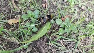 Bumble Bee Porn