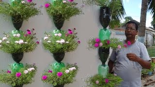 Tree planting in hanging bottles on wall thumbnail