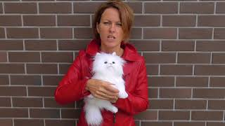 Белый котенок игрушка