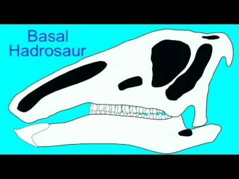 PL EXAM 2: HADROSAUR CRESTS.avi