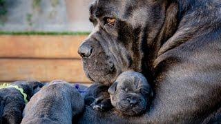 ТОП 16 Собак и Их Чудесные Мини Копии