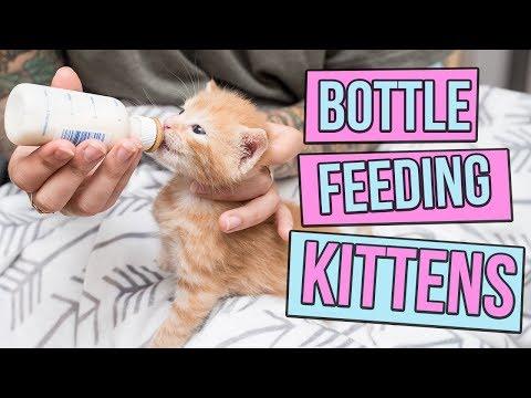 kitten illness symptom checker