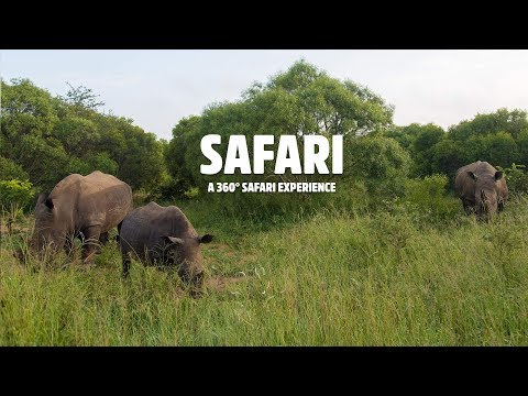 All Sides Of South African Safari