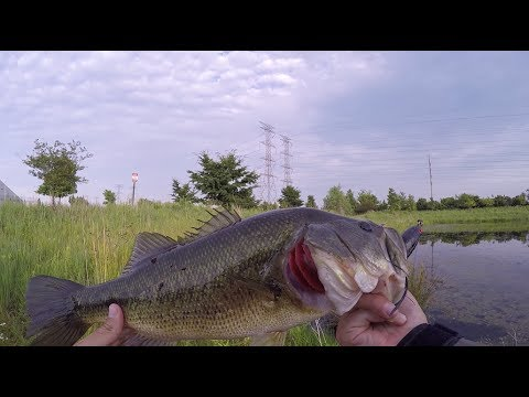 The BEST Time To Fish A Pond!!