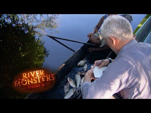 The Fish Species Of Papua New Guinea | River Monsters