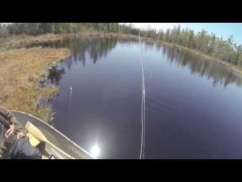 Fly Fishing Brook Trout In Nova Scotia During The Mayfly Hatch