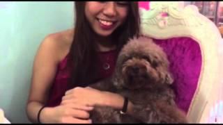 Vlog | The Poodle Cafe