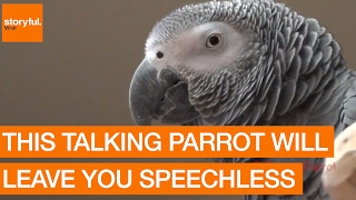 This Talking Parrot Will Leave You Speechless