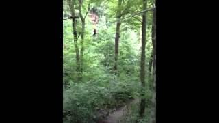More go ape Thumbnail